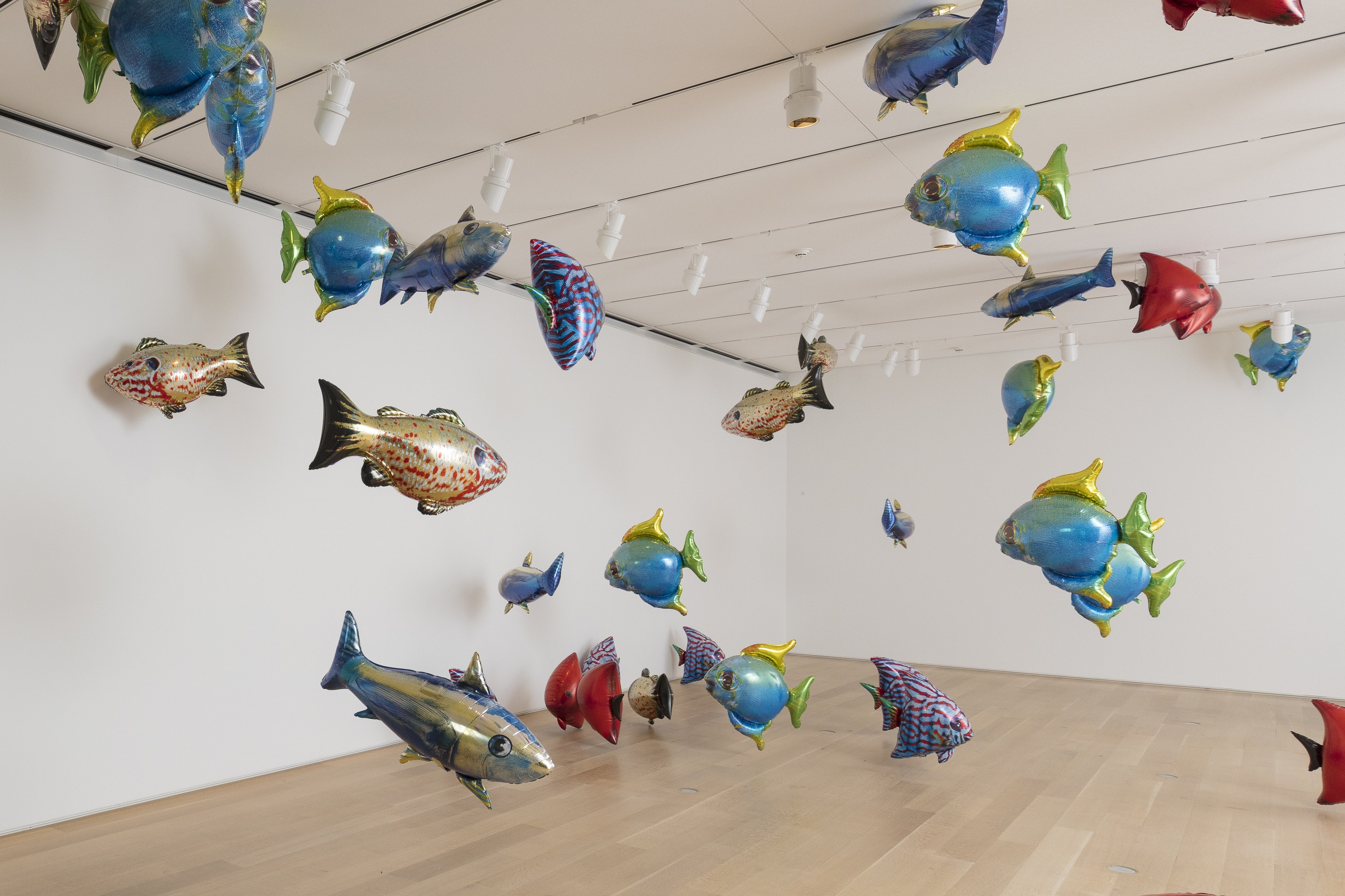 Photo of an installation of metallic, brightly colored, fish-shaped balloons in a room with white walls and wooden floors.