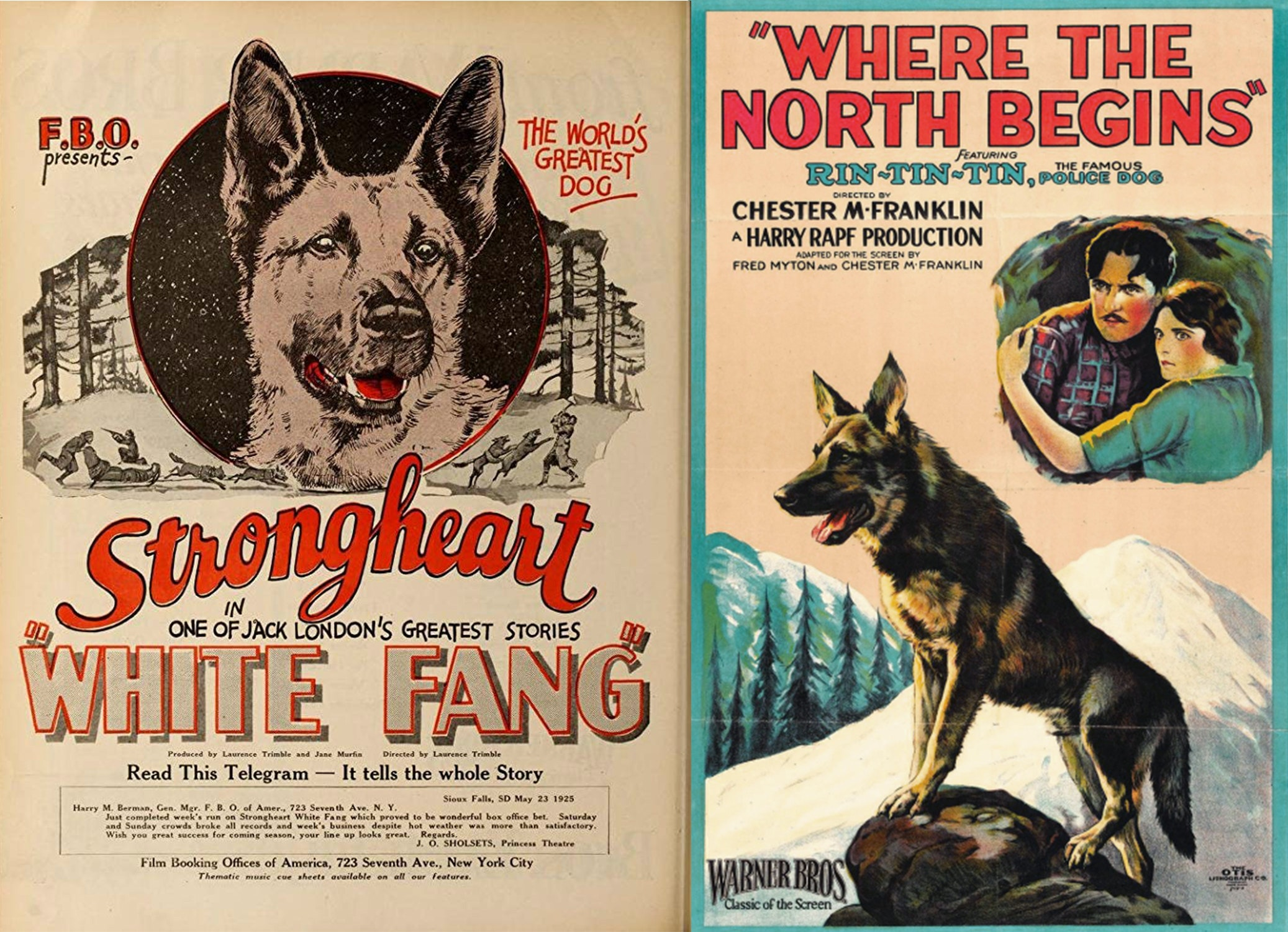 Two old movies posters, one featuring Strongheart and the other featuring Rin TIn TIn