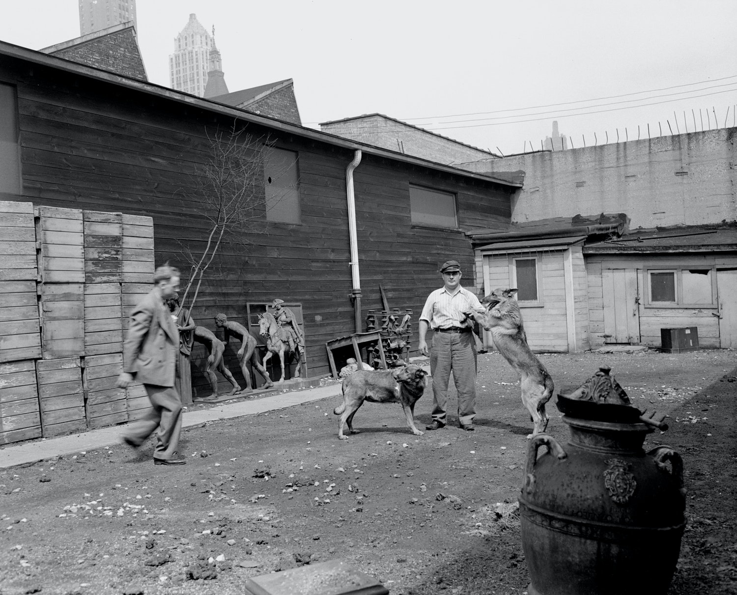 Early photo of two guard dogs and handler outside in the yard