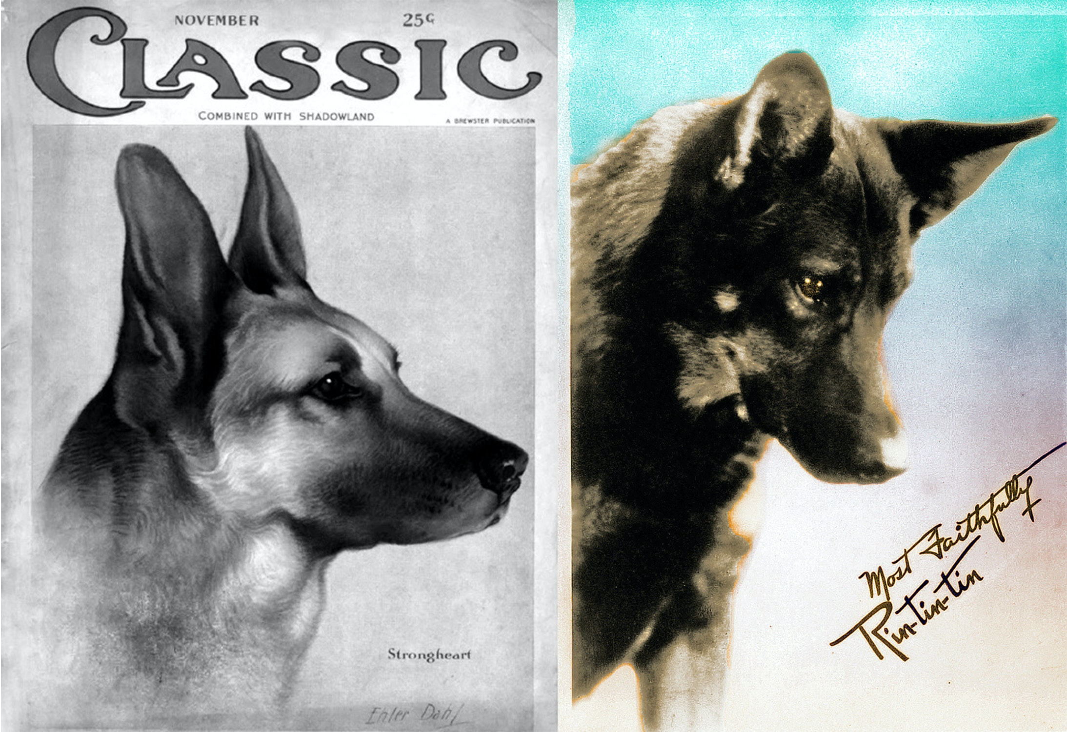 Side by side portrait photos of Strongheart and Rin TIn Tin